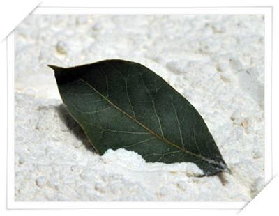 foglie di alloro per prevenire le tarme del cibo